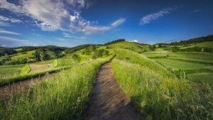 Grassland 5e
